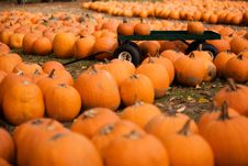 Free Farm Market In The Fall Stock Photography - 3571502