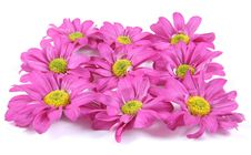 Free Pretty Pink Flowers. Stock Images - 3572354