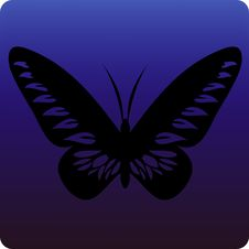 Free Butterfly Royalty Free Stock Photography - 3573067