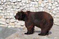 Free Brown Bear Stock Image - 3573951
