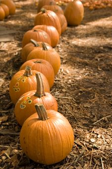Free Pumpkins And Stickers Royalty Free Stock Photos - 3574958