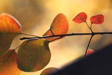 Free The Color Of Autumn Stock Photography - 3575712