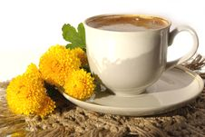 Free A Cup Of Coffee And  Flower Royalty Free Stock Photo - 3576615
