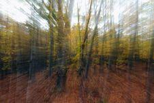 Free Autumn Forest Stock Photo - 3577840