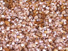 Free Seashell Background Royalty Free Stock Photo - 3577935