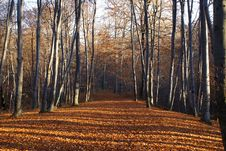 Free Forest Pending Winters Royalty Free Stock Photography - 3578737