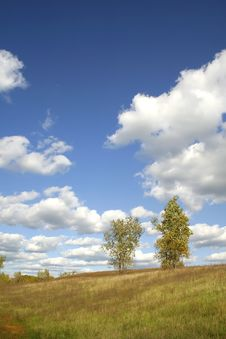 Free Tree In The Farm Stock Photos - 3578953