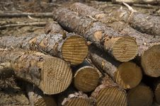 Free Freshly Cut Logs Stock Images - 3578994
