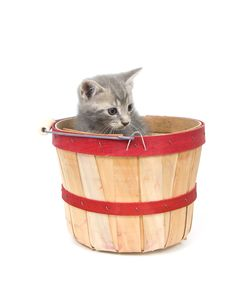 Free Gray Kitten In Apple Basket Stock Photos - 3579103