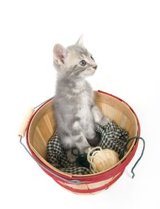 Kitten Sitting In A Basket