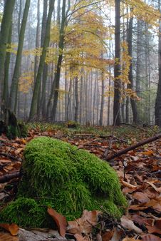 Free Autumn Forest Royalty Free Stock Images - 3579169
