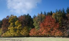 Free Autumn Forest Stock Photography - 3579292