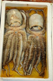 Octopus Twins Royalty Free Stock Photo