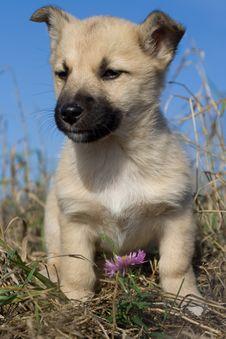 Free Puppy Dog Sitting Near Flower Royalty Free Stock Photography - 3579787