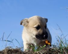 Free Puppy Dog Smelling Flower 4 Royalty Free Stock Photos - 3579798