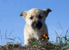 Free Puppy Dog Smelling Flower 5 Stock Images - 3579804