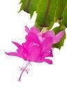 Free Beautiful Flower Royalty Free Stock Photos - 35717948