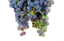 Free Bunch Grape Royalty Free Stock Images - 35719549