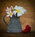 Free Plumeria Flower Stock Photos - 35720873