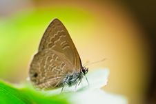 Free Butterfly On Green Leaf Stock Photos - 35724973