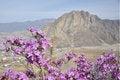 Free Beautiful Purple Flowers Royalty Free Stock Photo - 35768845