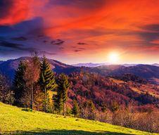 Free Coniferous Forest On A Mountain Slope Royalty Free Stock Photography - 35764647