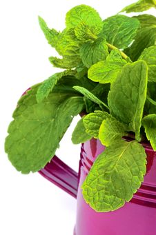 Free Mint Leafs Stock Image - 35770651