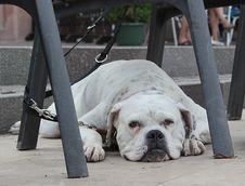 Free Sad Dog Royalty Free Stock Images - 35777529
