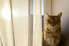 Cat Staring Into Camera And Sits On The Window Board Stock Photography