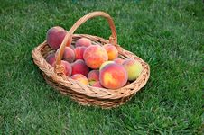 Free Beautiful Of Peaches Basket Stock Photo - 35794360