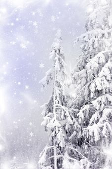 Free Winter Landscape With Snow Covered Pine Trees Royalty Free Stock Image - 35795006