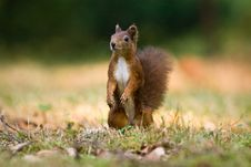 Free Squirrel Stock Images - 35797434