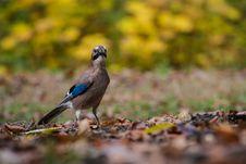 Free Bird Stock Photography - 35797592