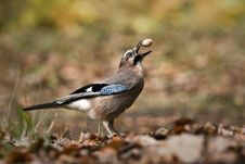 Free Bird Royalty Free Stock Images - 35797799