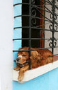 Free Dog In A Window Stock Photography - 3586802