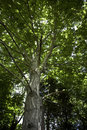 Free Majestic Tree Stock Image - 3586971