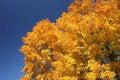 Free Fall Tree Colors Stock Image - 3587761