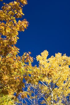 Free Yellow Leaves Royalty Free Stock Images - 3580159