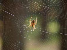 Free Spider On Cobweb Stock Images - 3581084