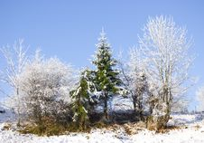 Free Small Fur-trees On Small Hill Royalty Free Stock Photos - 3582618