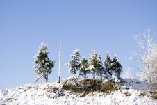 Free Small Fur-trees On Small Hill Stock Photography - 3582692