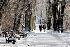 Free Park In Winter Stock Photography - 3585072