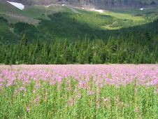 Free Mountain Meadow Royalty Free Stock Photos - 3586008