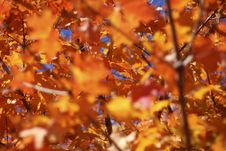 Free Autumn Colors Stock Image - 3587201