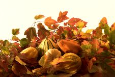 Free Autumn Leaves Arrangement Stock Images - 3587644