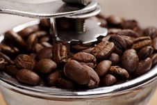 Free Grow Coffee Stock Image - 3588001