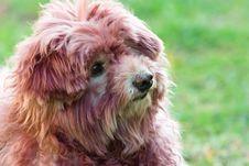 Free Dog Stock Photography - 3588382