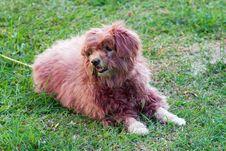 Free Dog Royalty Free Stock Images - 3588399