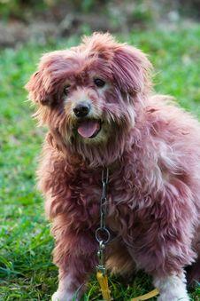 Free Dog Royalty Free Stock Photos - 3588618