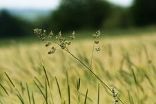 Free Grass Summer Field Royalty Free Stock Photos - 3589358